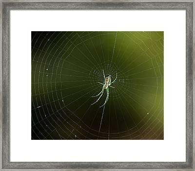 Mabel Orchard Spider Framed Print by Lara Ellis