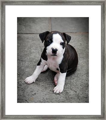 Macie Framed Print by Mark Rogan
