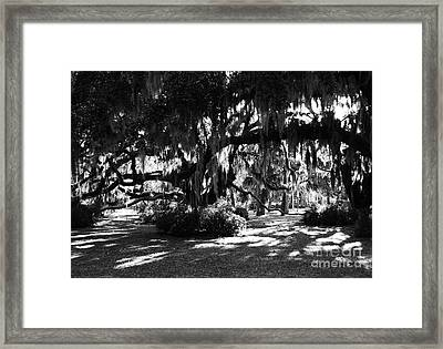 Made In The Shade Framed Print by Mel Steinhauer