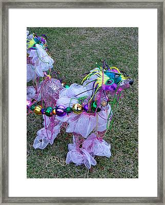 Mardi Gras Poodle At Starfish Cafe Framed Print by Kathy K McClellan