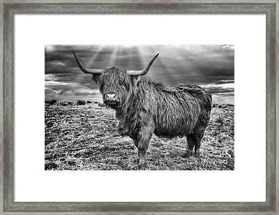 Magestic Highland Cow Framed Print by John Farnan