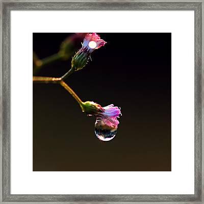 Magic Ball Framed Print by Janet Pancho Gupta