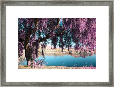 Magic Can Happen Framed Print by Laurie Search