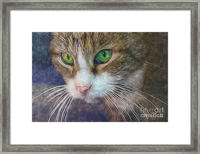 Magic Eyes Framed Print by Jutta Maria Pusl