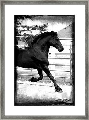 Magic Light Framed Print by Royal Grove Fine Art