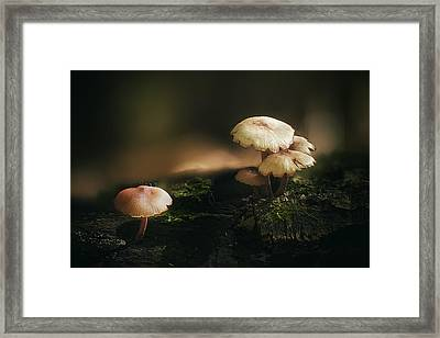 Magic Mushrooms Framed Print by Scott Norris