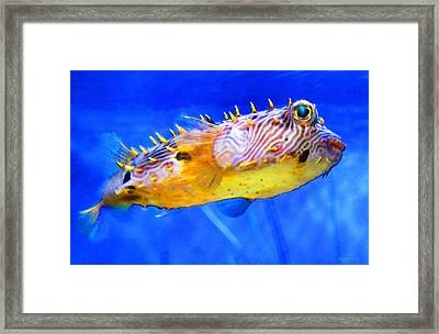 Underwater Diva Framed Print featuring the painting Magic Puffer - Fish Art By Sharon Cummings by Sharon Cummings
