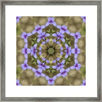 Magical Bluet Wildflower Kaleidoscope Framed Print by Kathy Clark