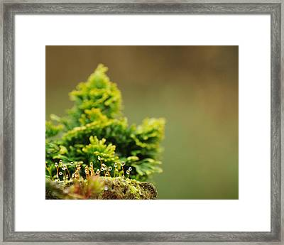 Magical World Of Green And Gold Framed Print by Rebecca Sherman