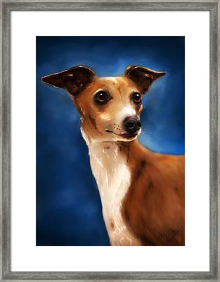 Magnifico - Italian Greyhound Framed Print by Michelle Wrighton