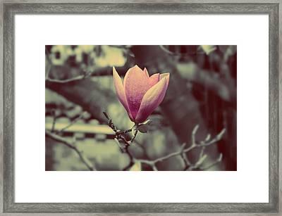 Magnolia Flower Framed Print by Marianna Mills