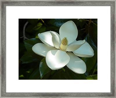 Magnolia Framed Print by Frank Tozier