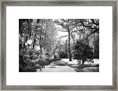Magnolia Gardens Framed Print by John Rizzuto
