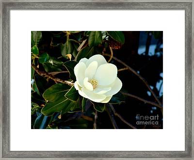 Magnolia Grandiflora Framed Print by Hanza Turgul
