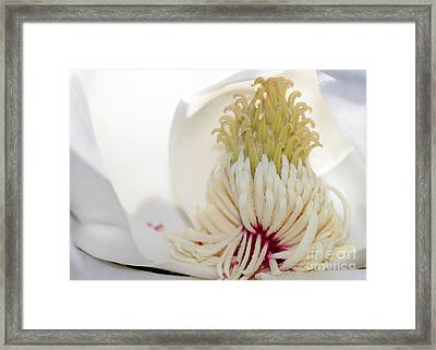 Magnolia Sticky Fingers Framed Print by Sabrina L Ryan