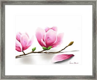 Magnolia Framed Print by Veronica Minozzi