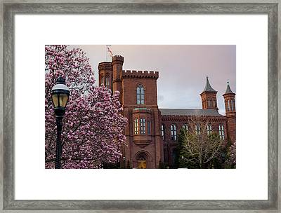Magnolias Near The Castle Framed Print by Andrew Pacheco