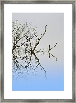 Magpie Framed Print by Sharon Lisa Clarke