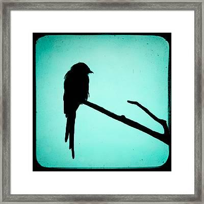 Magpie Shrike Silhouette Framed Print by Gary Heller