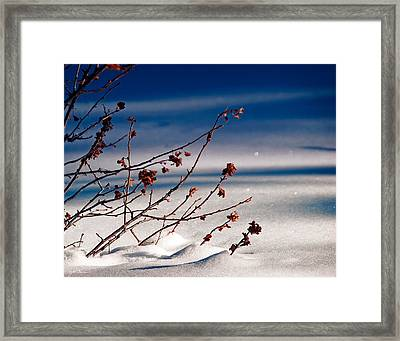 Mahogany Bush In Winter Snow Framed Print by Julie Magers Soulen