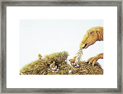 Maiasaura Dinosaur And Young Framed Print by Deagostini/uig