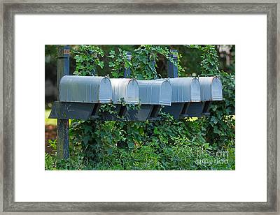 Mailboxes And Ivy Framed Print by Louise Heusinkveld