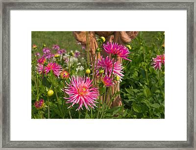 Majenta Flowers Framed Print by AMB Fine Art Photography