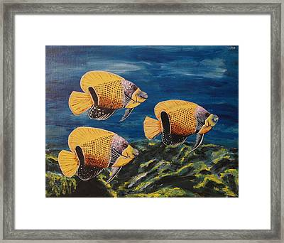 Majestic Angelfish Framed Print by Wayne Cantrell