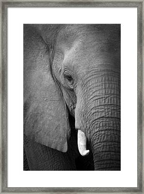 Majestic Giant Framed Print by Alison Buttigieg