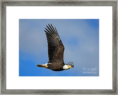 Majestic Glide Framed Print by Mike Dawson