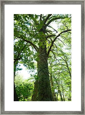 Majesty Framed Print by Barbara Shallue