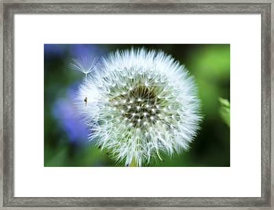 Make A Wish Framed Print by Christi Kraft