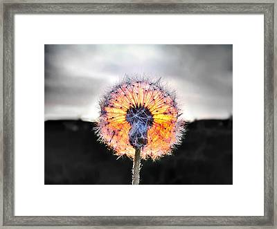 Make A Wish  Framed Print by Marianna Mills