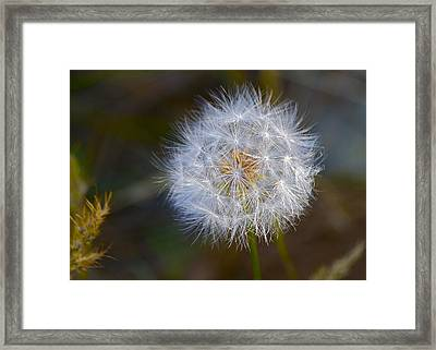 Make A Wish Framed Print by Michael Blesius