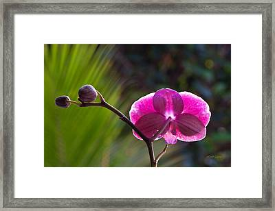 Making An Entrance Framed Print by Michelle Wiarda