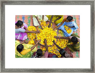 Making Flower Garlands Framed Print by Tim Gainey