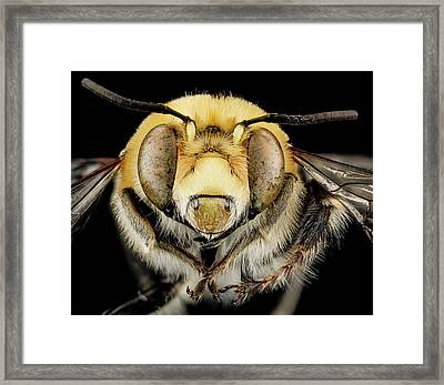 Male Bee Framed Print by Us Geological Survey