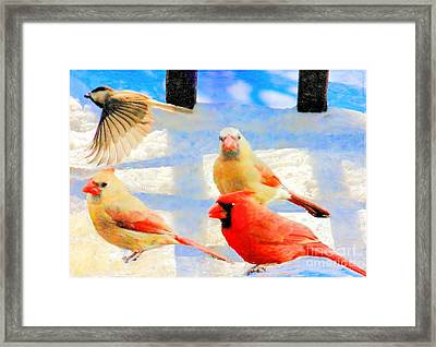 Male Cardinal With Two Females And Junco Framed Print by Janette Boyd