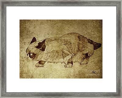 Male Cat Hunts At Night Framed Print by Daniel Yakubovich