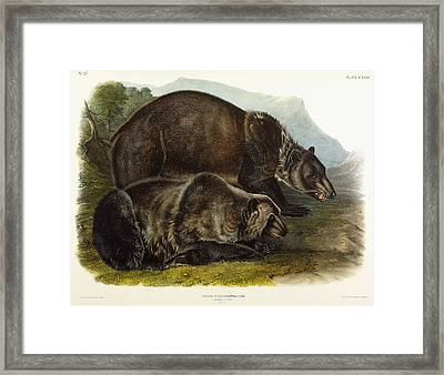 Male Grizzly Bear Framed Print by Audubon