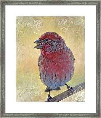 Male Housefinch With Corner Decorations Framed Print by Debbie Portwood