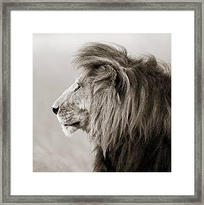 Male Lion IIi Masai Mara Kenya Framed Print by Regina Mueller