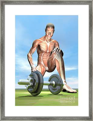Male Musculature Looking At A Dumbbell Framed Print by Elena Duvernay