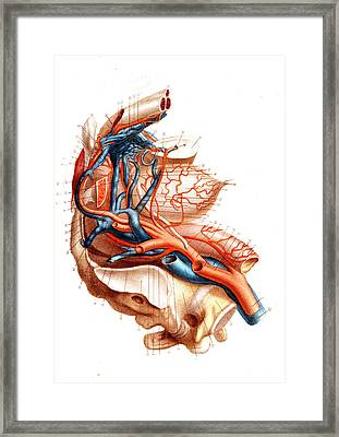 Male Pelvic Blood Supply Framed Print by Collection Abecasis