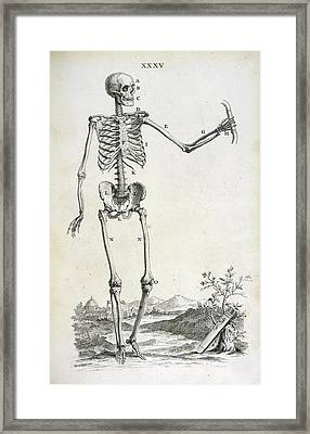 Male Skeleton Framed Print by British Library