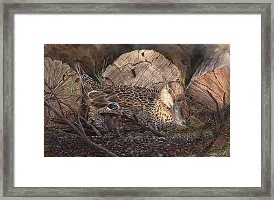 Mallard On Nest Framed Print by Dana Spring Parish
