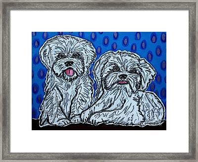 Maltese Duo Blue Bg Framed Print by Cynthia Snyder