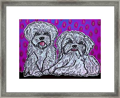 Maltese Duo Pink Bg Framed Print by Cynthia Snyder
