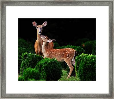 Mama And Her Fawn Framed Print by Angel Cher