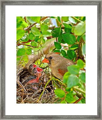 Mama Bird Framed Print by Frozen in Time Fine Art Photography